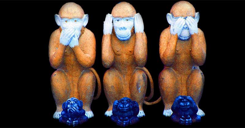 monkey see monkey do 800w